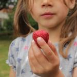 schooltuin aardbeien oogs